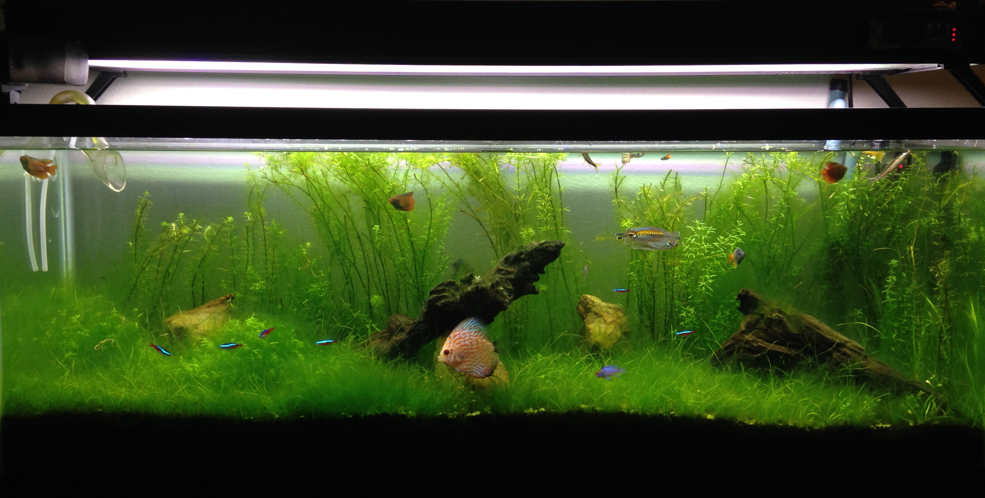 Fish tank cleaning service - Top Pick